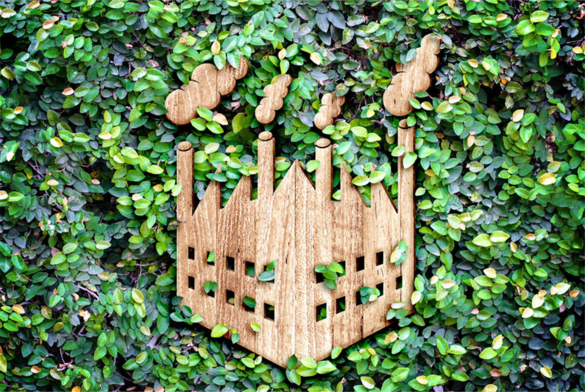 Frenar la despoblación – Innovar desde los recursos forestales – Proteger el medio ambiente